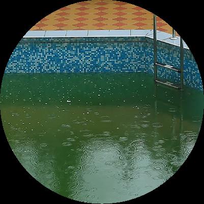 algae-water