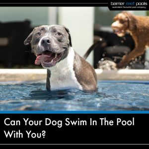 can your dog swim in the pool with you